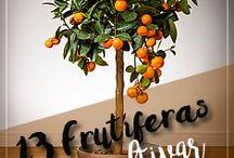 frutíferas em vaso