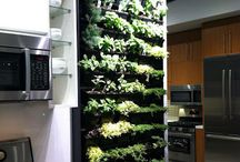 Gardening & Country Homestead Ideas / Creative ways to GO Greener starting at home!