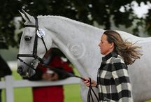 The Trot Ups 2015 / A parade of style or a first horse inspection? You Choose! Images from the internationals across the world this year. #style #eventing #trotups #equestrian Please credit Uptown Eventing when sharing.