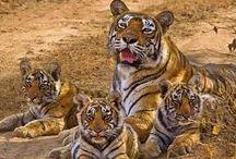 Voyage en Inde: Ranthambore National Park