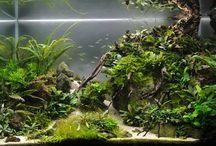 planted tanks / a nice combination of aroids: Bucephalandra, Cryptocoryne, Anubias