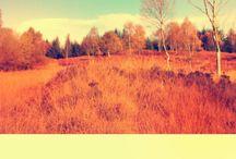 Autumn colors inspiration