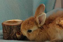 Кролик Эклерка