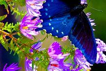 蝶・とんぼ・他の昆虫