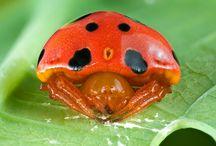 Cute Invertebrates