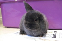Rabbits! Cute disapproving mischief! / DIE HOOOMIN! RABBIT TAKEOVER / by Awkward Soul