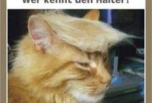 Trump Katze!!!!!!!