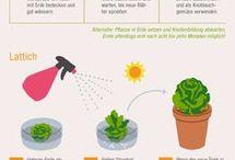 Pflanzen zu Hause