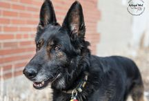 Adoptable Dogs in the GTA