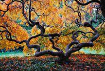 grow / i love trees