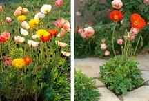 zahradka / kyticky