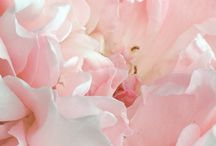 flowers / by Debbie Hart