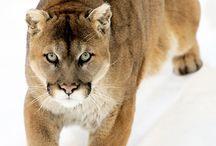Zima / Zvířata,příroda
