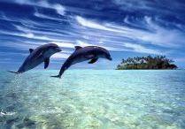 golfinhos / golfinhos
