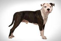 dog breed info