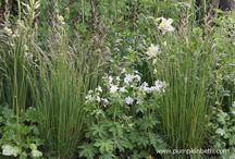 White flowers / Beautiful white flowers.