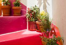Plantas / Para dar vida y color a tu casa o departamento