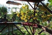 záhrada - garden / ...moje kvety