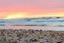 Ocean Inspiration / by Leeann Morrissey