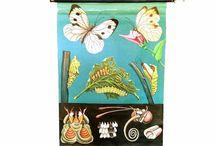Butterfly Pre-Exhibit