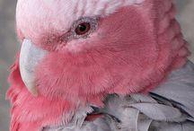 Vogels