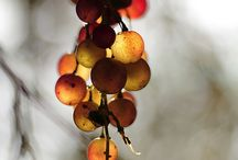 fruitpics