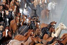 Uomini e cavalli