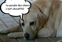 On aime les animaux!