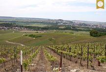 #1 Rendez-vous in Champagne-Ardenne / Photos du tournage #1 à Ay avec Pauline.