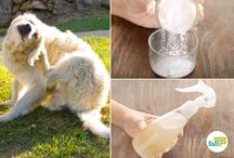 Animals and Natural Remedies for Animals