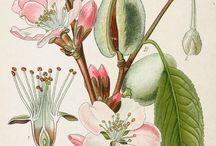 ilustracje flory