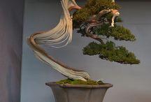 Bonsai kai