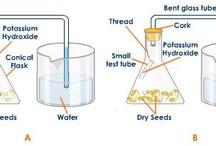 GCSE Respiration- experiments