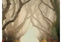 The Hobbit / by Kenneth Baker