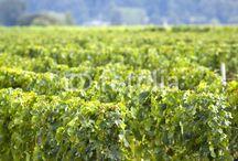 Vins de Bordeaux / Bouteilles