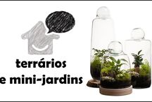 terrários e mini-jardins