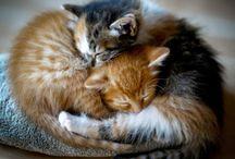 {fuzzy animals}
