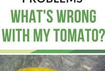 tomato probs