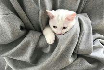 DAMN CUTE CATS