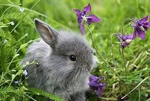 conilhs e lèbres / lapins et lièvres
