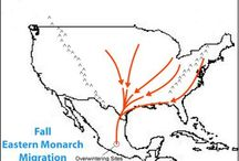 Save the Monarchs / Resources for Citizen Scientists who want to help protect monarchs and their habitats