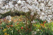 Magnolias / by Sandra Jarrold