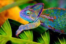 Color: Rainbow / by Megan Lapp