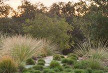 Ideas for handley garden / Landscape Inspiration