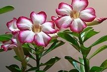 Plants I like / by Pam Johnston