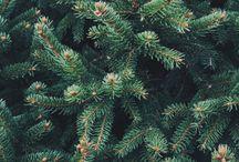 Spruce, Pine, Birch...