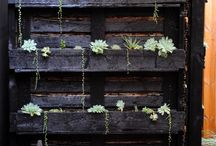 To do with Pallets / Planting ideas using pallets!