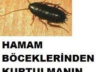 Kara böcek