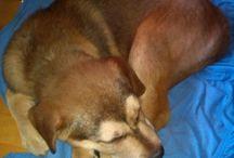 Floyd / Unser Hund - ein Labrador-Schäferhund Mischling. Seit Anfang 2014 mischt er unsere Familie kräftig auf