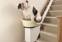 Cool things for your pets